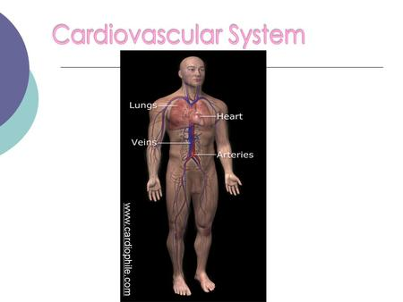 Www.cardiophile.com. Also known as the circulatory system The cardiovascular system is made up of the heart, blood, and blood vessels www.hcplive.com.