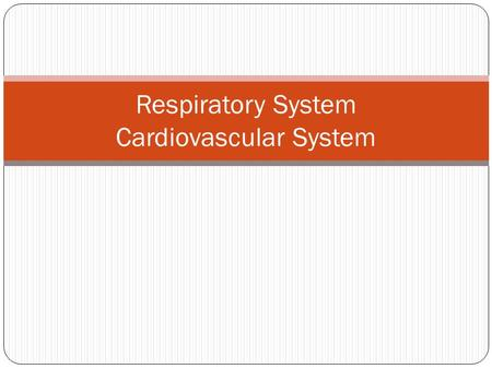 Respiratory System Cardiovascular System. The Respiratory System.