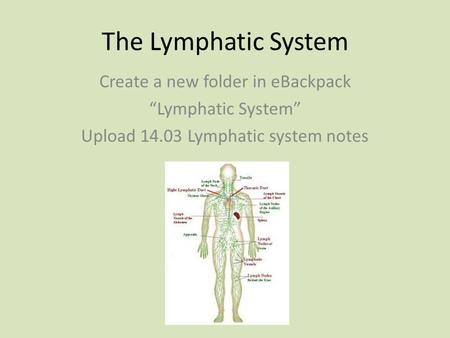 "The Lymphatic System Create a new folder in eBackpack ""Lymphatic System"" Upload 14.03 Lymphatic system notes."
