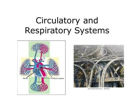 Circulatory and Respiratory Systems. Circulatory System Function: - transport nutrients, oxygen, and wastes throughout the body Closed system meaning.