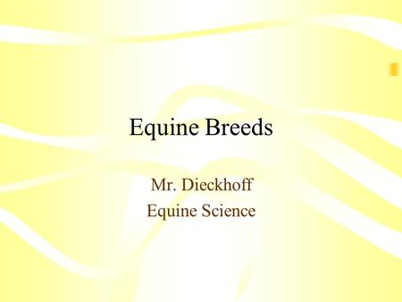 Equine Breeds Mr. Dieckhoff Equine Science. Terminology.