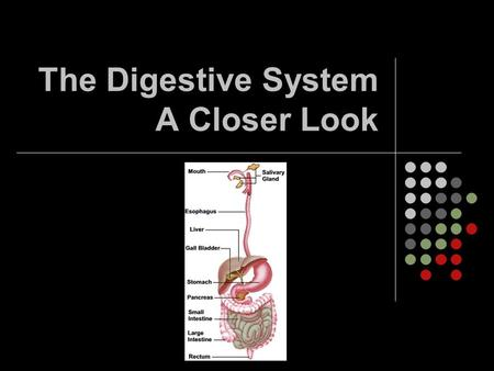 The Digestive System A Closer Look. Betcha didn't know that… Your intestines are 7.5 metres long! A horse's intestines are 27 metres long! Digestion from.