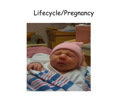 Lifecycle/Pregnancy. The Beginning of the Life Cycle.