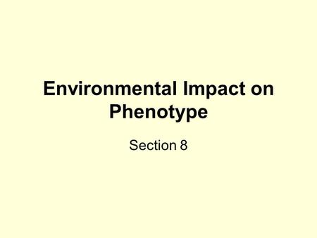 Environmental Impact on Phenotype Section 8. Genotype, Environment & Phenotype The final physical appearance (phenotype) of an organism depends on the.