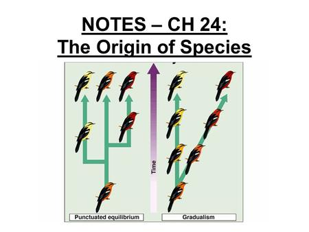 NOTES – CH 24: The Origin of Species