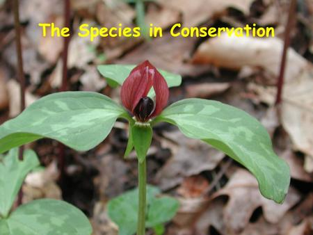 The Species in Conservation. Taxonomy- the science of classification.