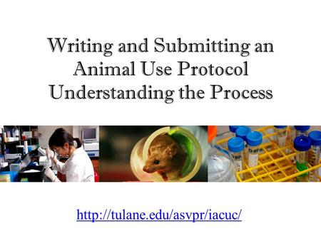 Writing and Submitting an Animal Use <strong>Protocol</strong> Understanding the Process