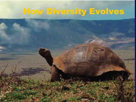 How Diversity Evolves. Macroevolution The evolution of large scale diversity Evolutionary novelties Wings, feathers, brain sizes Speciation: origin of.