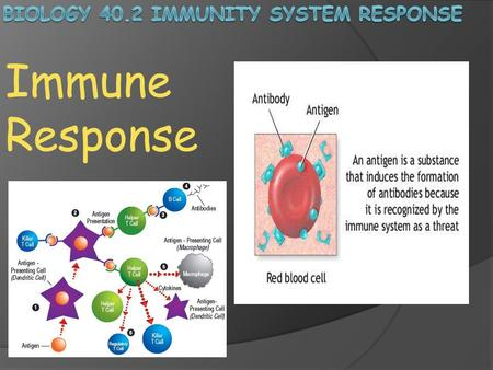 Immune Response. What happens when pathogens occasionally overwhelm your body's nonspecific defenses? Pathogens that have survived the first and second.