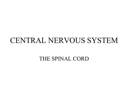 CENTRAL NERVOUS SYSTEM THE SPINAL CORD. FUNCTIONS OF THE SPINAL CORD CONDUCTS NERVE IMPUSLES TO AND FROM THE BRAIN PROCESSES SENSORY INFORMATION (LIMITED)