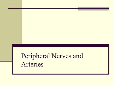 "Peripheral Nerves and Arteries. Information IN Sensory or ""afferent"" neurons carry information into the CNS from receptors located throughout the body."