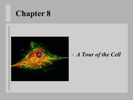 Chapter 8 n A Tour of the Cell. How can we see cells? n Light microscope – Uses light and lenses to magnify n Electron microscope – Uses beam of electrons.