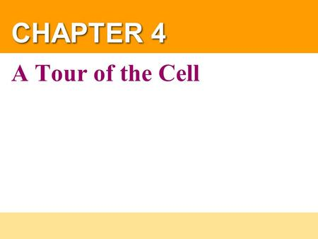 CHAPTER 4 A Tour of the Cell. Copyright © 2004 Pearson Education, Inc. publishing as Benjamin Cummings If you stacked up 8000 cell membranes, they would.
