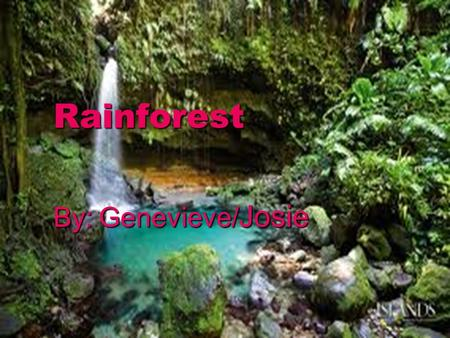 Rainforest By: Genevieve/ Josie. Location  Rainforest are all over the world.  A Rainforest is sometimes by the oceans and sometimes they are not. 