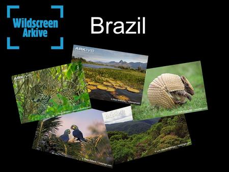 Brazil. Brazil is home to at least 103,870 animal species and between 43,000 and 49,000 plant species Each year about 700 new animal species are discovered.