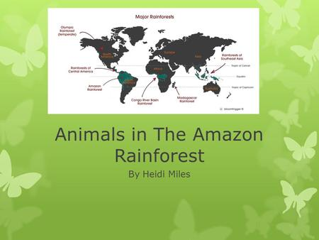 Animals in The Amazon Rainforest By Heidi Miles. Lesson Plan for Grades 3-5  This lesson provides students with an opportunity to learn about the behaviors.