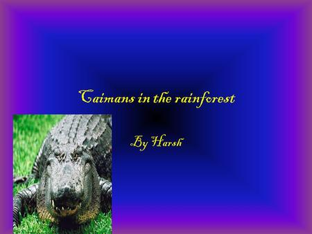 Caimans in the rainforest By Harsh. Forest Floor and Understory The forest floor and understory are the two lowest layers.The forest floor is the lowest.