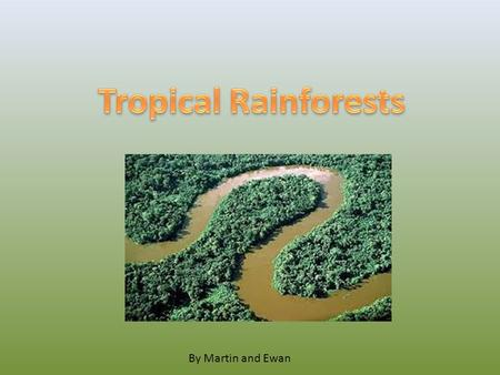 By Martin and Ewan. A Rainforest is a wet, hot, humid forest. They are found near to the equator.
