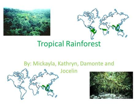 Tropical Rainforest By: Mickayla, Kathryn, Damonte and Jocelin.