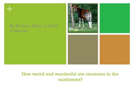 + How weird and wonderful are creatures in the rainforests? By Brianna, Bella. C, Holly & Hannah.