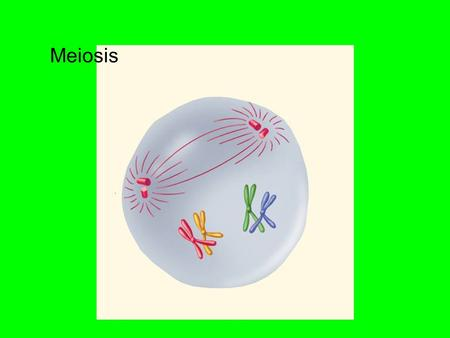 Meiosis. I Definition: *The formation of Gametes(sex cells) that separates the two sets of genes so that each gamete ends up with just one set. *Each.