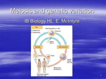 1 Meiosis and genetic variation IB Biology HL E. McIntyre.