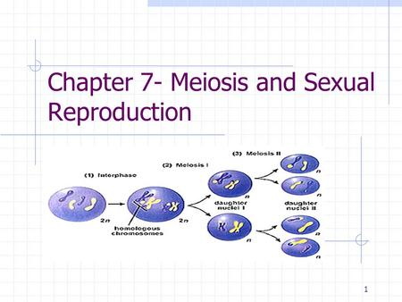1 Chapter 7- Meiosis and Sexual Reproduction. 2 I. Meiosis A. Meiosis forms haploid cells 1. Gametes are haploid, containing one set of chromosomes. 2.