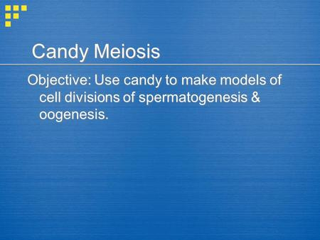 Candy Meiosis Objective: Use candy to make models of cell divisions of spermatogenesis & oogenesis.