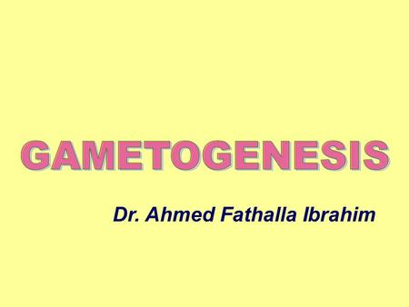 Dr. Ahmed Fathalla Ibrahim. MITOSIS DIFFERENCE BETWEEN MITOSIS & MEIOSIS.