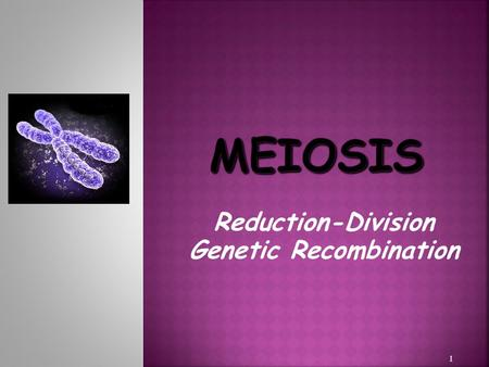 Reduction-Division Genetic Recombination 1. GAMETES, HALF CHROMOSOMES, (  Creation of GAMETES, with HALF the number of CHROMOSOMES, (HAPLOID)  MeiosisSEXUAL.