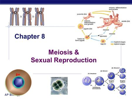 AP Biology 2005-2006 Chapter 8 Meiosis & Sexual Reproduction.