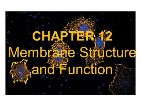 CHAPTER 12 Membrane Structure and Function. Biological Membranes are composed of Lipid Bilayers and Proteins -Biological membranes define the external.