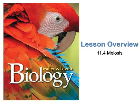 Lesson Overview 11.4 Meiosis.