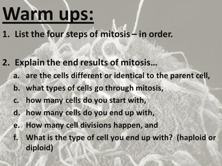 Warm ups: List the four steps of mitosis – in order.