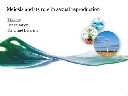 Meiosis and its role in sexual reproduction