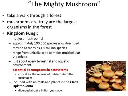 """The Mighty Mushroom"" take a walk through a forest mushrooms are truly are the largest organisms in the forest Kingdom Fungi: – not just mushrooms! – approximately."