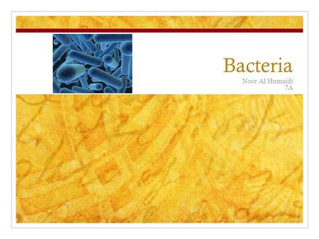 Bacteria Noor Al Humaidi 7A. Bacteria background Bacteria is everywhere in the food you eat to the soil you plant flowers and crops in and its also in.