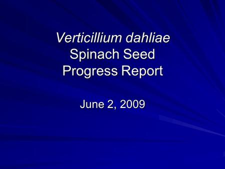 Verticillium dahliae Spinach Seed Progress Report June 2, 2009.