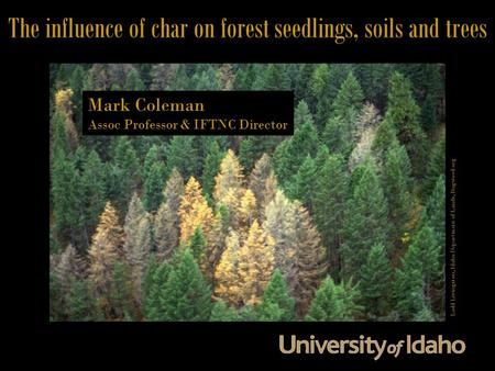 The influence of char on forest seedlings, soils and trees Mark Coleman Assoc Professor & IFTNC Director Ladd Livingston, Idaho Department of Lands, Bugwood.org.