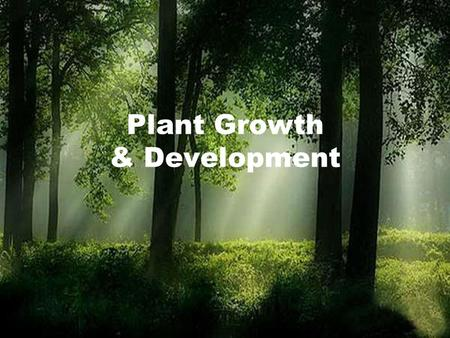 Plant Growth & Development. Necessities for Plants Plants require the following: –Water, carbon dioxide and light in order to run photosynthesis and produce.