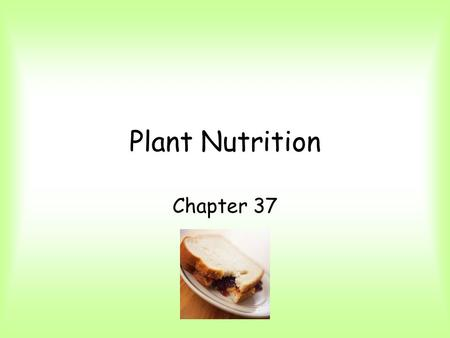 Plant Nutrition Chapter 37. Uptake of nutrients happens in roots and leaves. Roots, through mycorrhizae and root hairs, absorb water and minerals from.