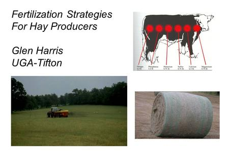 Fertilization Strategies For Hay Producers Glen Harris UGA-Tifton.