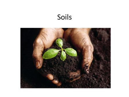 Soils. Products of weathering Soil Characteristics Regolith – Loose material covering solid rock Dust, sediment, broken rock – Soil is the only part.