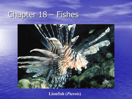 Chapter 18 – Fishes Lionfish (Pterois). Phylum Chordata Bilateral Bilateral Notocord – rod of cartilage, it forms the spine in some – (2) Notocord – rod.