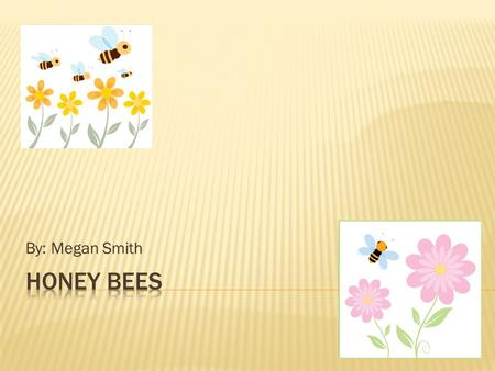 By: Megan Smith.  What are the different types of a honey bee?.......3  What is the job of a worker bee?........4  What is the job of a drone bee?........5.