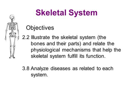 Skeletal System Objectives 2.2 Illustrate the skeletal system (the bones and their parts) and relate the physiological mechanisms that help the skeletal.