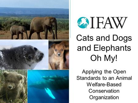 Cats and Dogs and Elephants Oh My! Applying the Open Standards to an Animal Welfare-Based Conservation Organization.