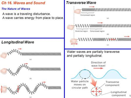 Ch 16. Waves and Sound The Nature of Waves A wave is a traveling disturbance. A wave carries energy from place to place. Longitudinal Wave Transverse Wave.