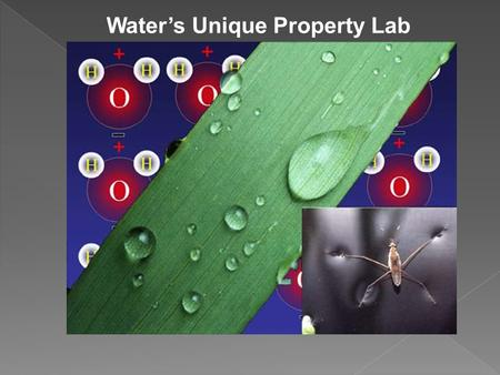 Water's Unique Property Lab. Experiment #1: What is cohesion? -waters attraction to other water molecules.