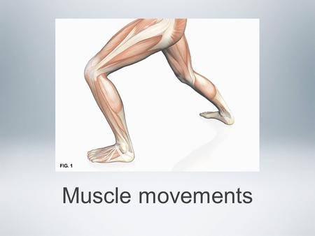 Muscle movements. Types of muscle contractions We have said so far that muscles will contract or shorten via the sliding filament theory This is true,